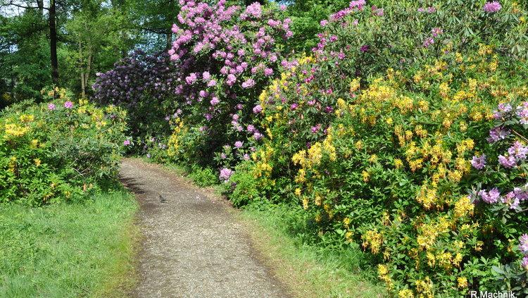 Kromlau Rhododendronpark TGG Neisseland