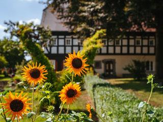 Obercunnersdorf Sonnenblumen vor Umgebindehaus