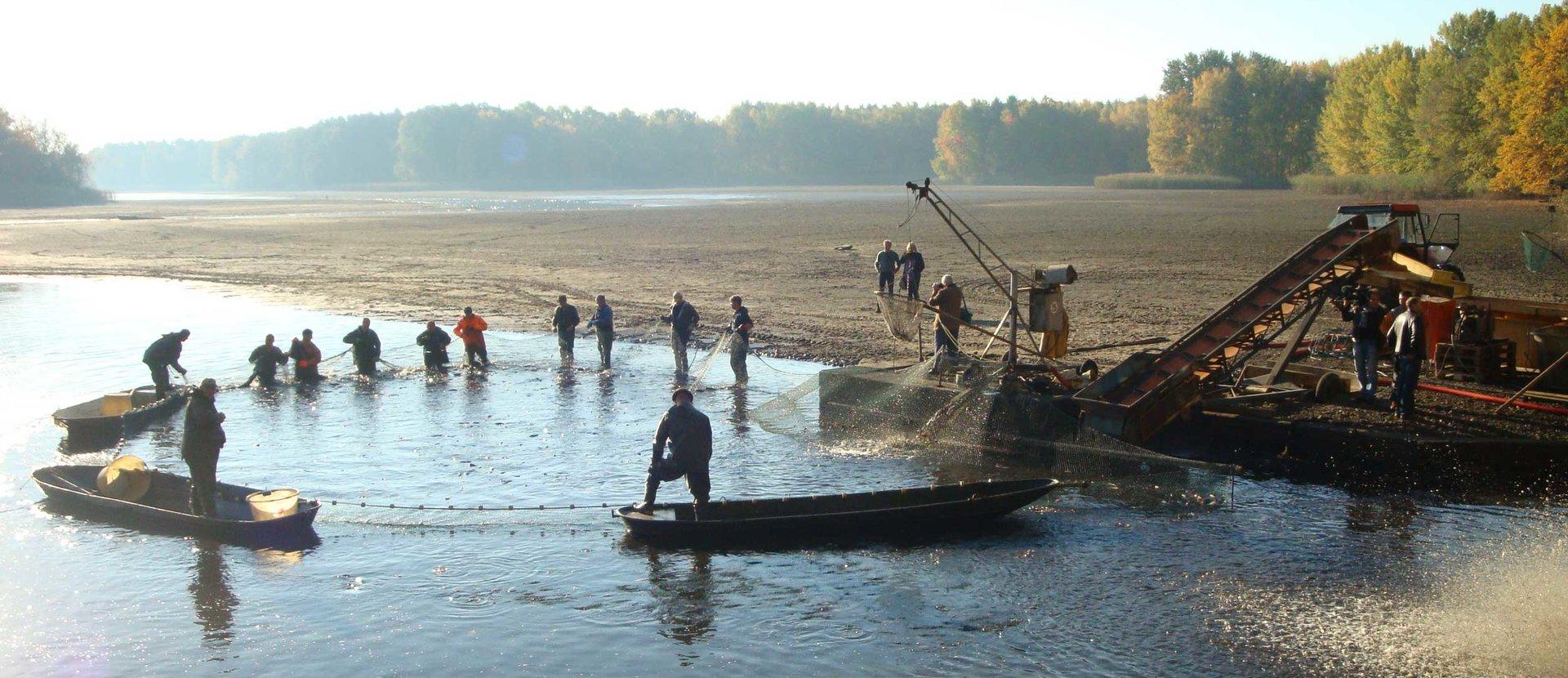 Lausitzer Fischwochen Lausitzer Fisch entdecken, erleben und genießen