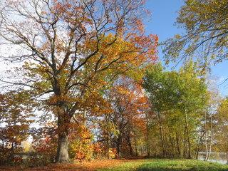Herbstfaerbung