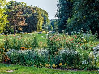 Sommerblumen im Herrengarten