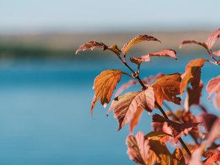 Insel der Sinne Herbst