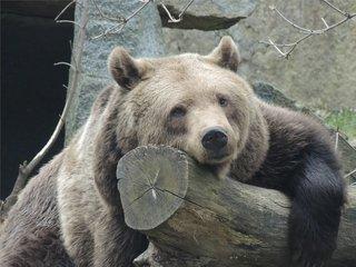 Zoo i Park Kultury Bischofswerda