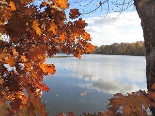 Herbstfaerbung am Teich