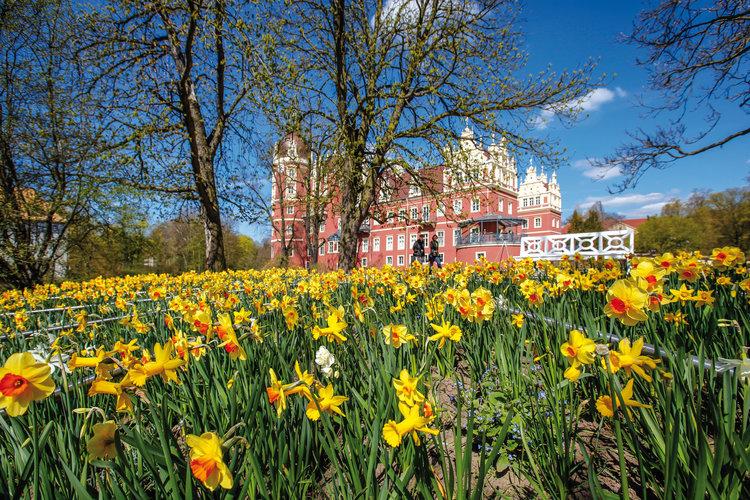 Der Schlossgarten am Neuen Schloss in erster Bluetenpracht Stiftung Fuerst Pueckler Park Bad Muskau