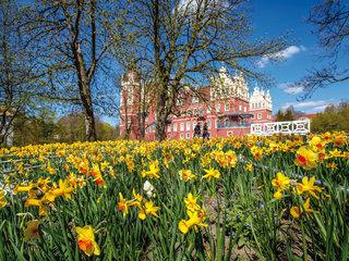 Der Schlossgarten am Neuen Schloss in erster Bluetenpracht