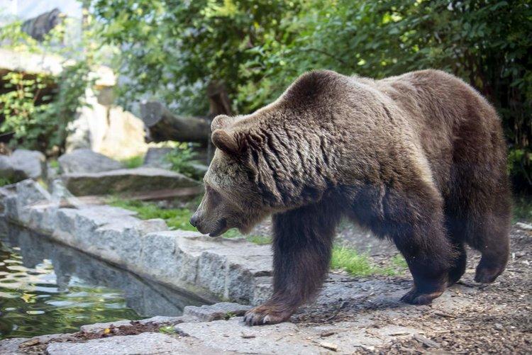 Tier und Kulturpark Bischofswerda Grafox GmbH TGG Westlausitz