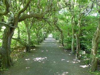 Laubengang im Schlosspark Pulsnitz