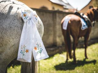 geschmueckte Pferde